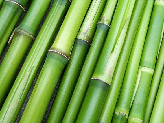 bamboo ET2C sourcing Vietnam