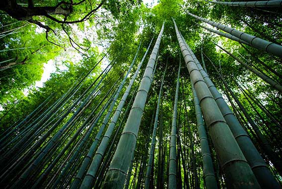 Bamboo Forest ET2C Int. Green Sustainable
